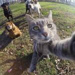 攝影分享:貓咪也會自拍?!